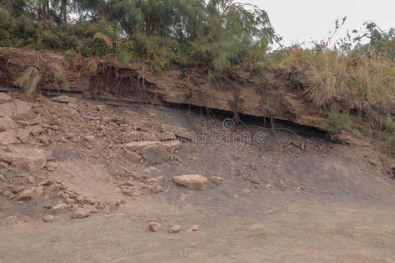 树行被暴露在海边峭壁与粉碎的地球和土的面孔侵蚀 从小河的干燥沙子侵蚀 土壤侵蚀c 库存照片