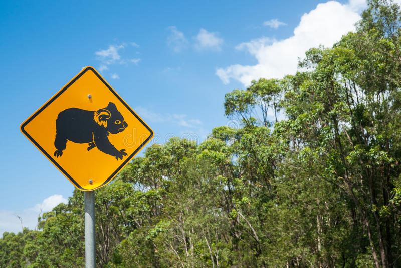 树袋熊在黄色近的乡下公路的警报信号黑色在Aus 免版税库存照片