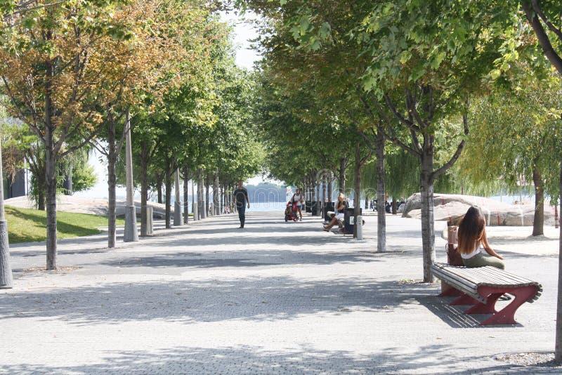树被排行的公园走道多伦多,加拿大 库存照片