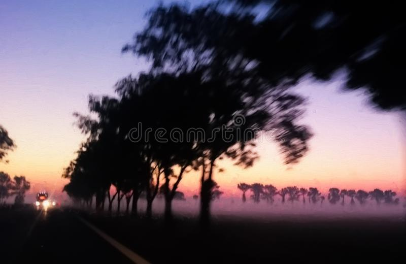 树被排行的路在黎明 免版税库存照片