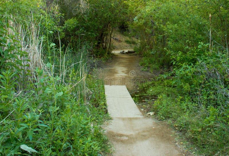 树被盖的足迹和脚桥梁在白垩粉大农场原野公园 库存照片