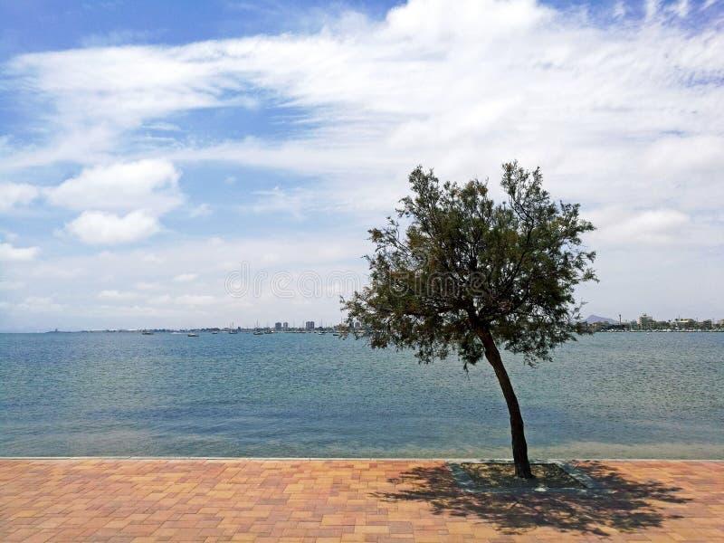 树被隔绝反对多云天空和海景 免版税库存照片