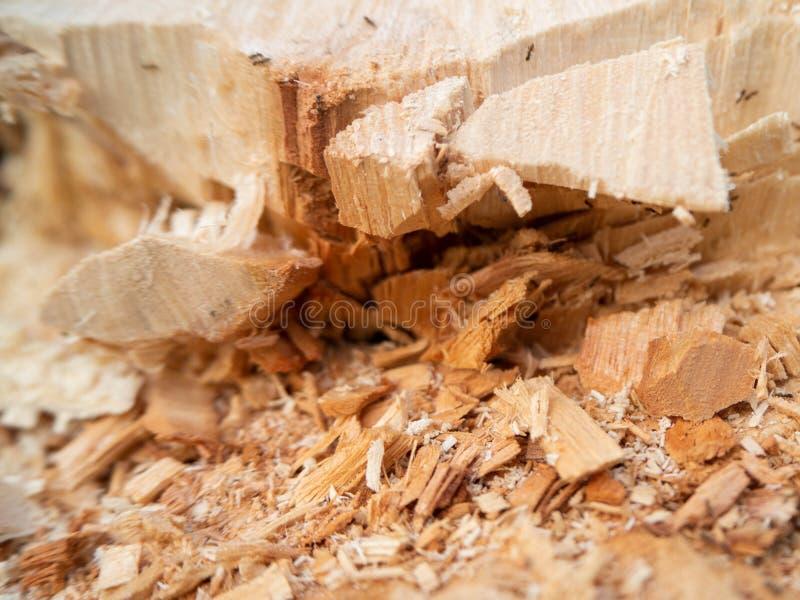 树裁减,削减了木头纹理,庭院家,泰国 免版税图库摄影