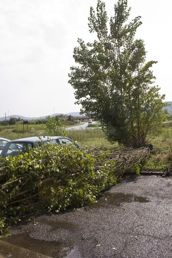 树跌倒 库存图片