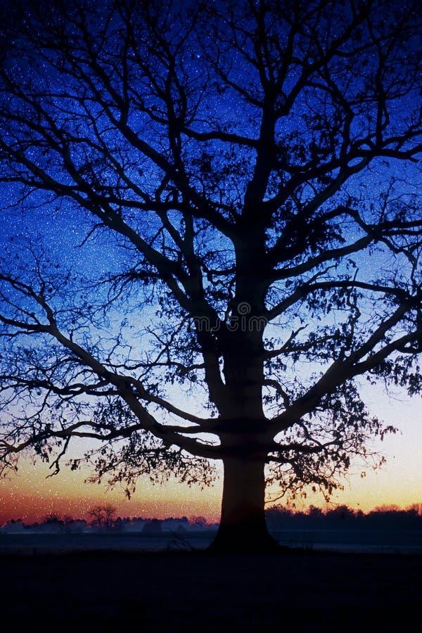 树身分现出轮廓反对银河 库存照片