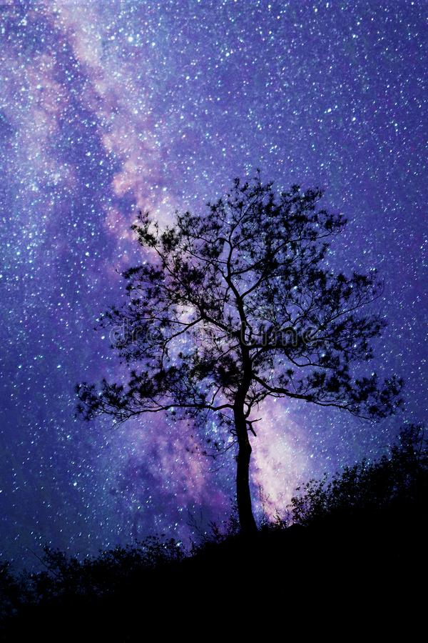 树身分现出轮廓反对银河 免版税库存照片