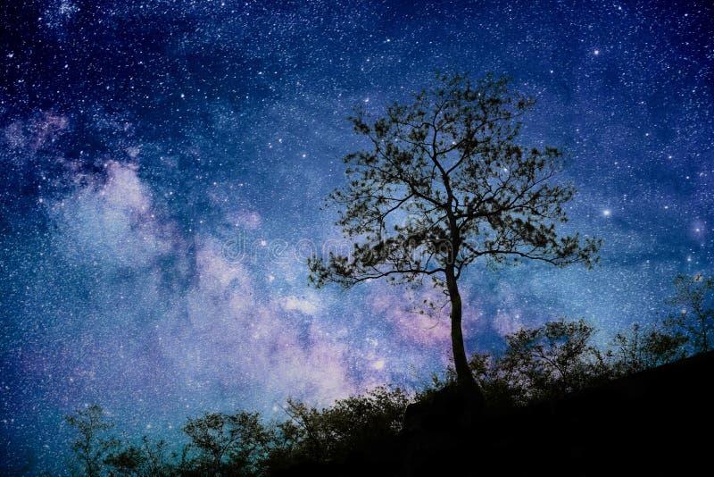 树身分现出轮廓反对银河 库存图片