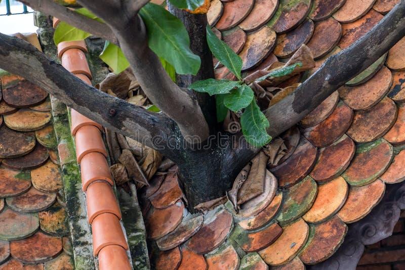 树通过屋顶增长 库存照片