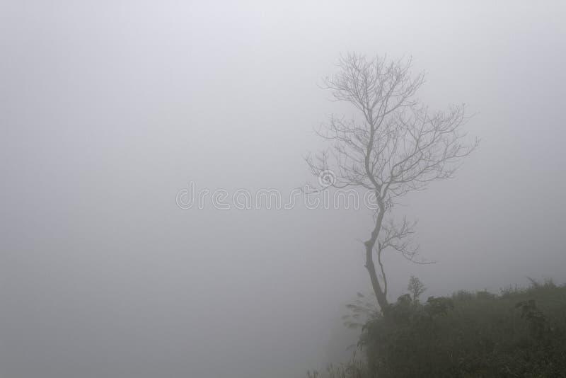 树通过雾 免版税库存照片