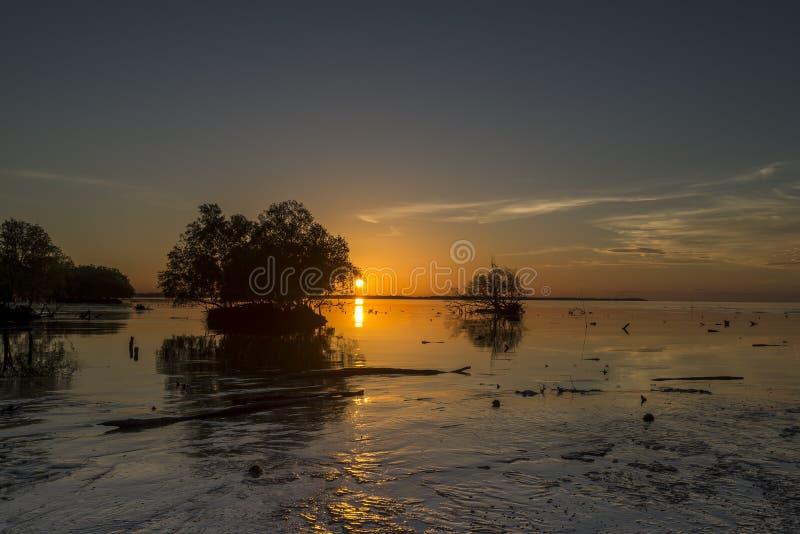 树长寿 在日落的死亡 免版税图库摄影