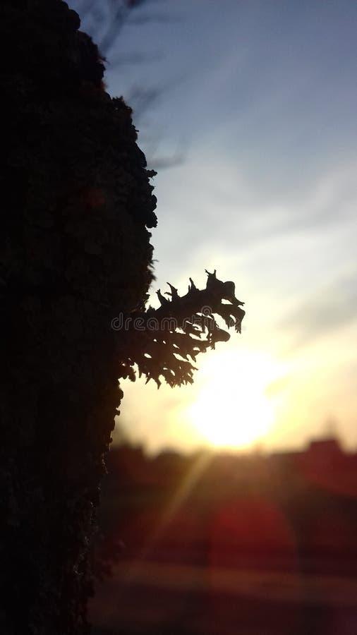 树阴影 免版税库存照片