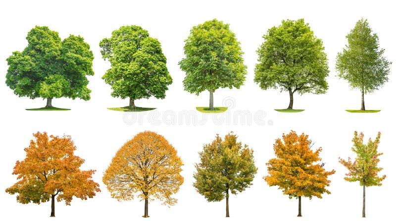 树隔绝了白色背景橡木槭树菩提树桦树 图库摄影