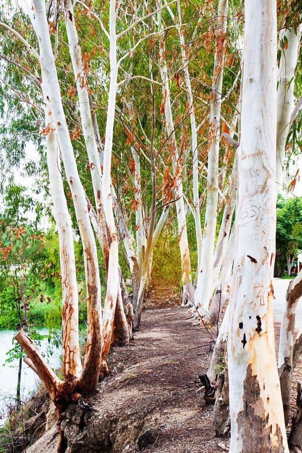 树隧道自然土地 免版税库存图片