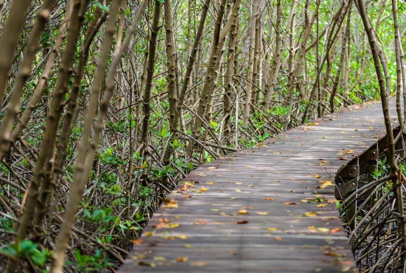 树隧道,木桥在美洲红树森林里 免版税图库摄影