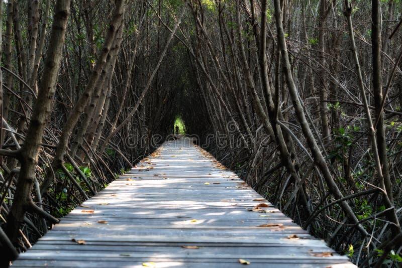树隧道,木桥在Laem的Phak Bia美洲红树森林里, 库存照片