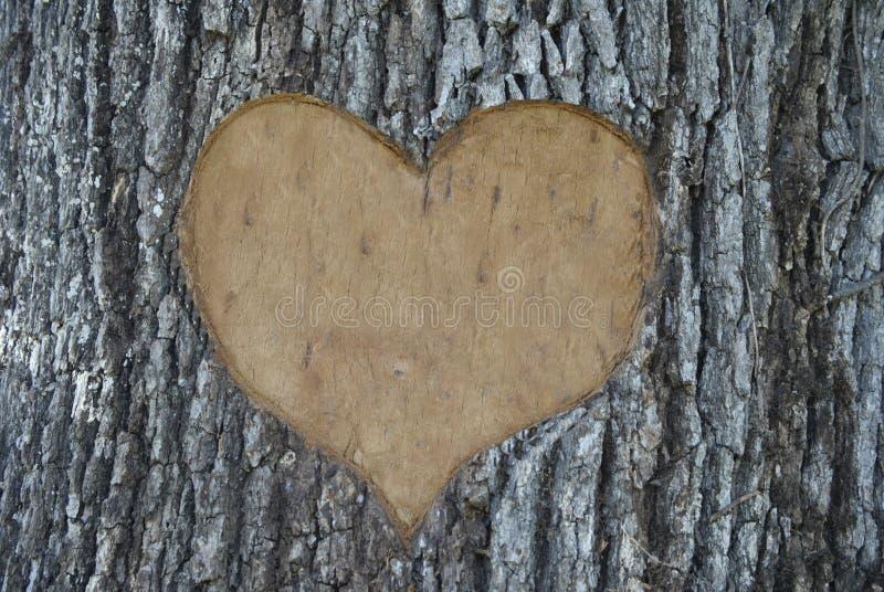 树雕刻 免版税库存照片