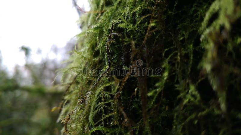 树青苔和植被 免版税库存照片