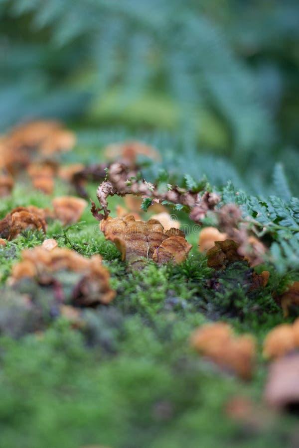 树青苔和真菌 免版税图库摄影