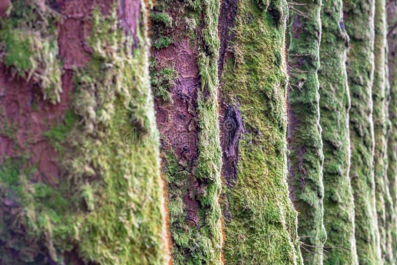 树青苔线 免版税库存照片