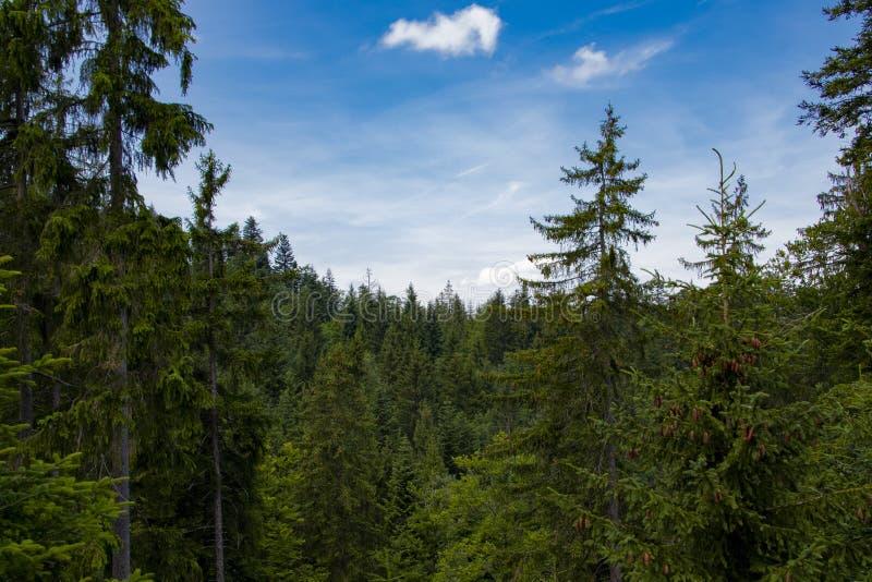 树顶面小山在阿尔卑斯在夏天 库存照片