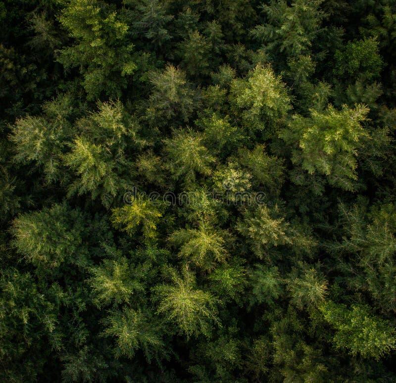 树鸟瞰图在森林里 免版税库存照片