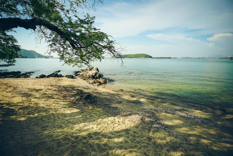 树,在Atsadang桥梁,在酸值张,泰国的地界附近的海滩 免版税库存照片