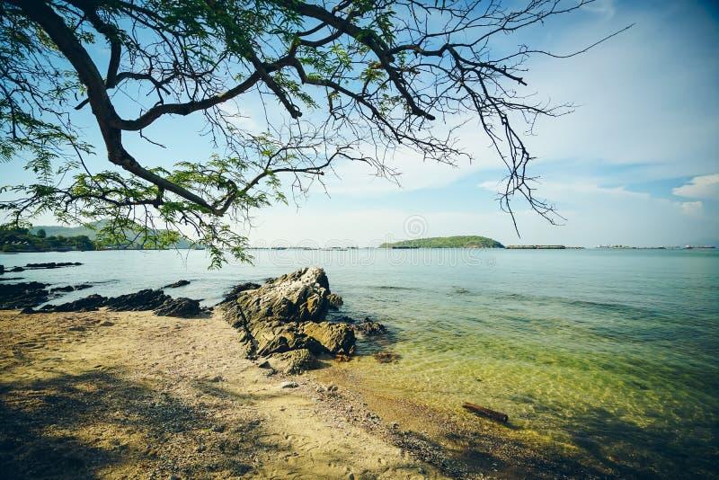 树,在Atsadang桥梁,在酸值张,泰国的地界附近的海滩 库存照片