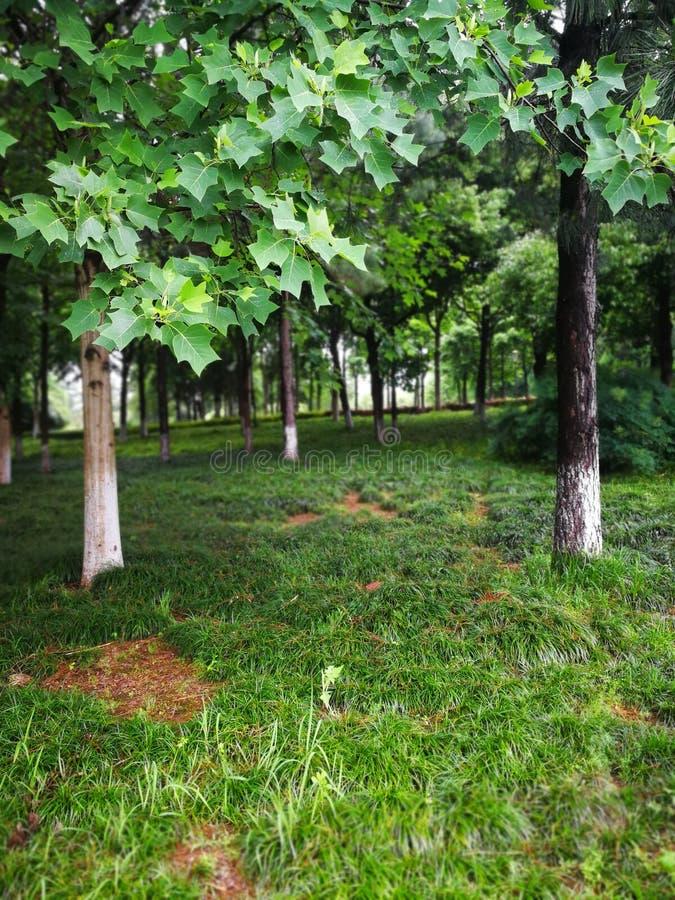 树,找找的分支与绿色叶子的 免版税图库摄影