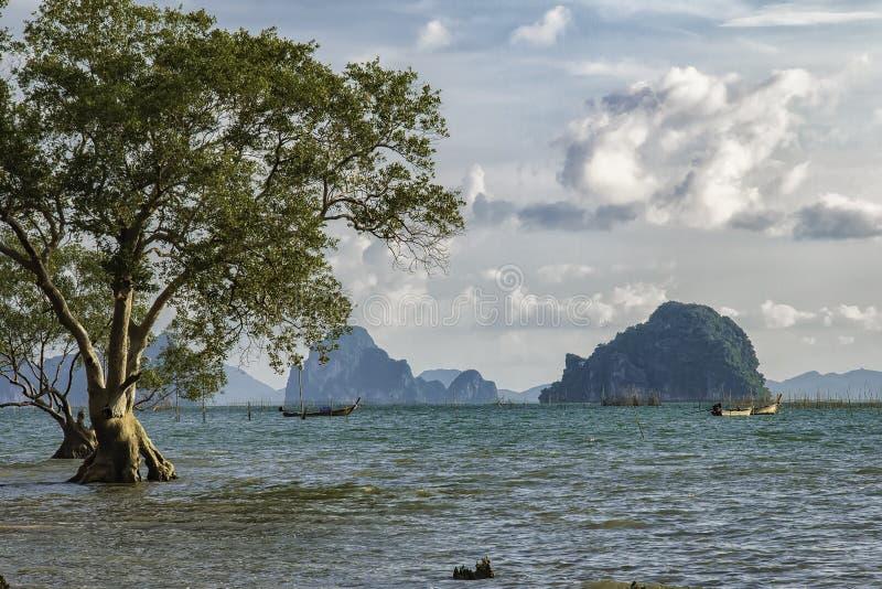 树,海滩,预言在天,蓝色海,看见小船和美丽的海岛 库存图片