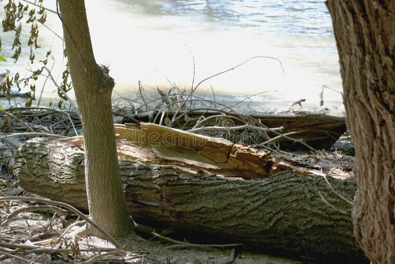 树-多瑙河 库存照片