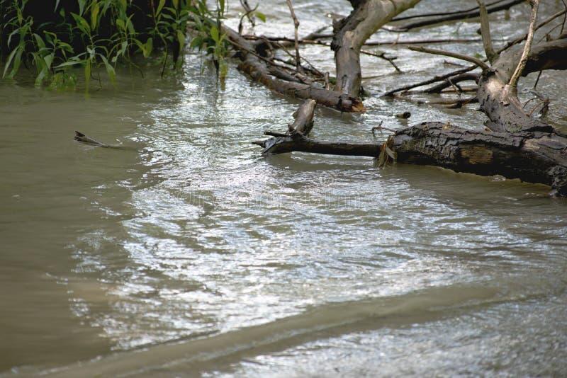 树-多瑙河 免版税库存照片
