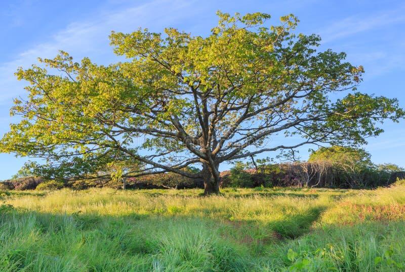 树崎岖的庭院阿什维尔北卡罗来纳NC 免版税图库摄影
