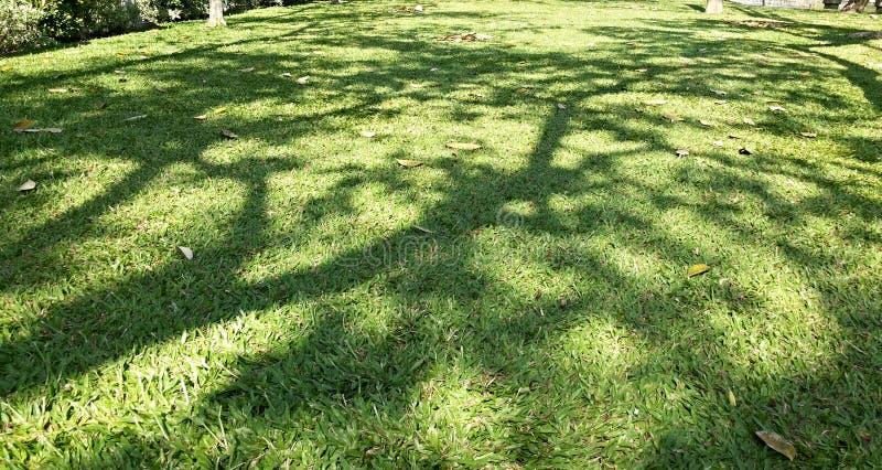 树阴影在公园 免版税图库摄影