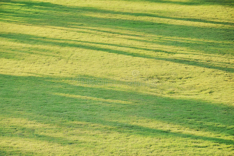 树阴影抽象背景在草地的 免版税库存图片