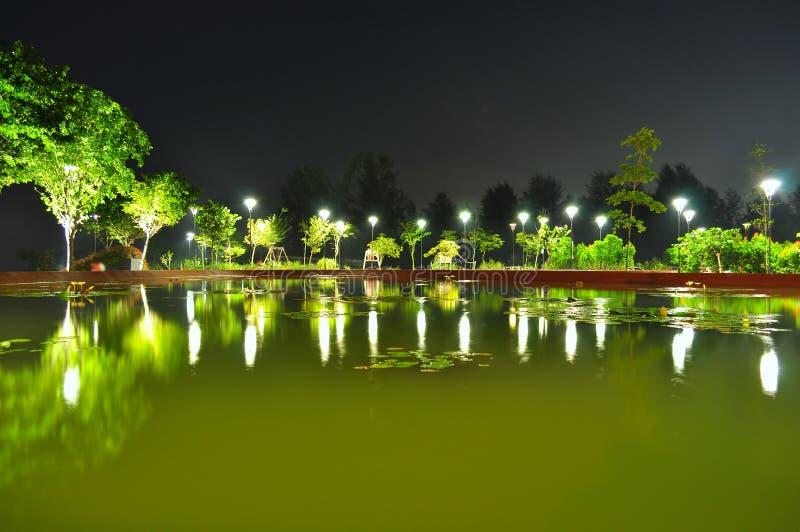 树围拢的池塘在晚上 库存照片