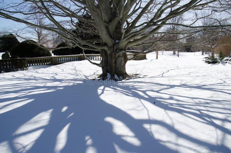 树-纽波特,康涅狄格,美国的阴影在破碎机豪宅之外的 免版税库存图片