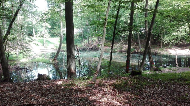 树水绿色 图库摄影