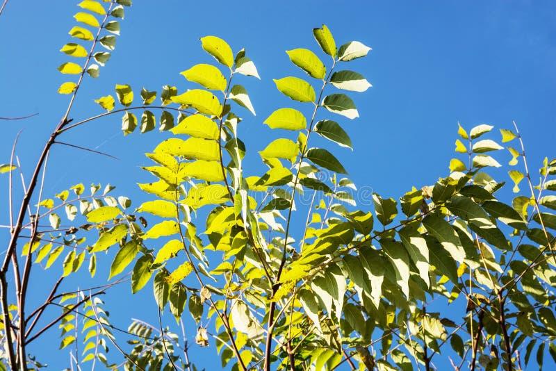 树细节与蓝天的在秋天 库存照片