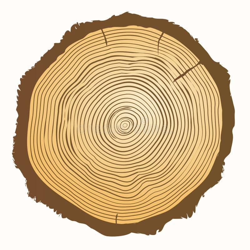 树年轮 传染媒介木背景 皇族释放例证