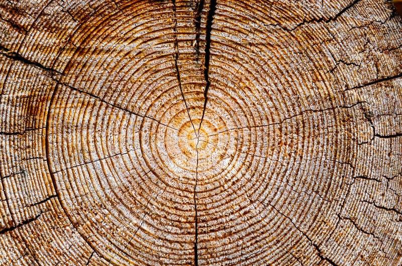 树年龄圆环 免版税图库摄影