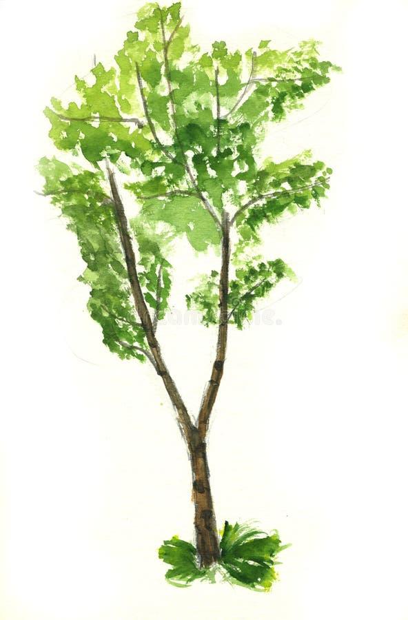 树 库存例证