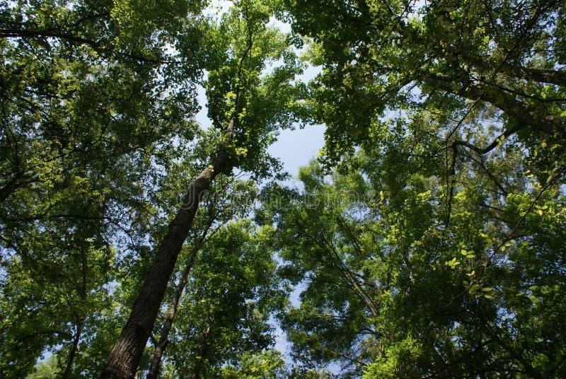 树 库存图片
