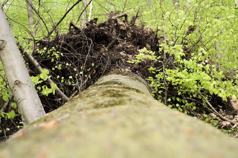 树 图库摄影
