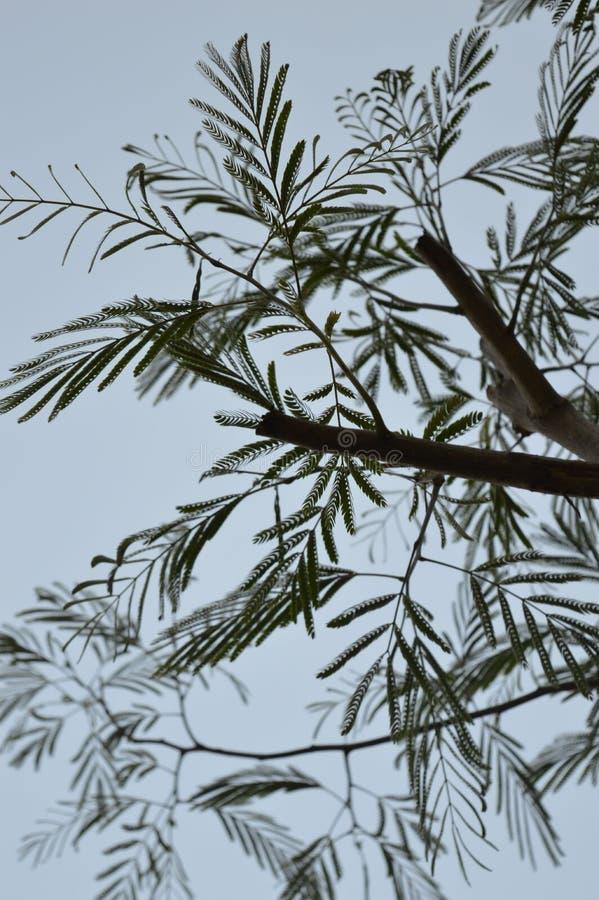 树 库存照片