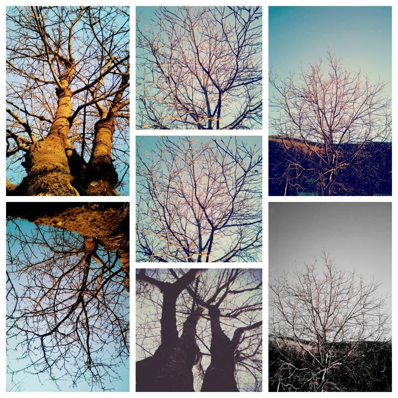 树colage在秋天 库存图片