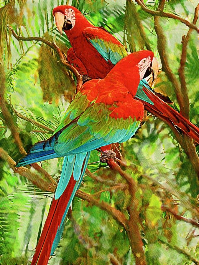栖息在分支的双鹦鹉有五颜六色的绿色背景 免版税图库摄影