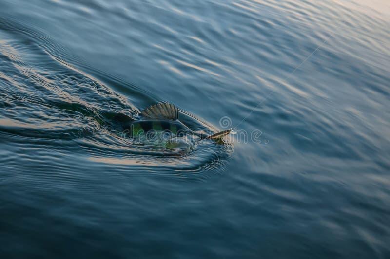 栖息处在水中 库存照片