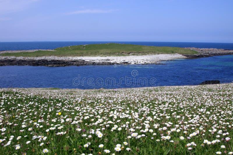 栖所小岛machair西部的苏格兰 库存图片