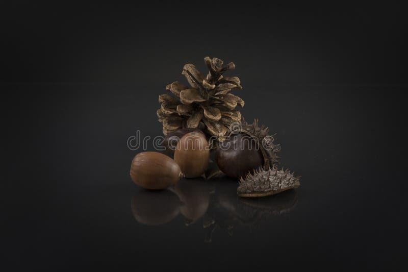 栗子、橡子和杉木锥体在黑色 艺术性的七叶树照片 图库摄影