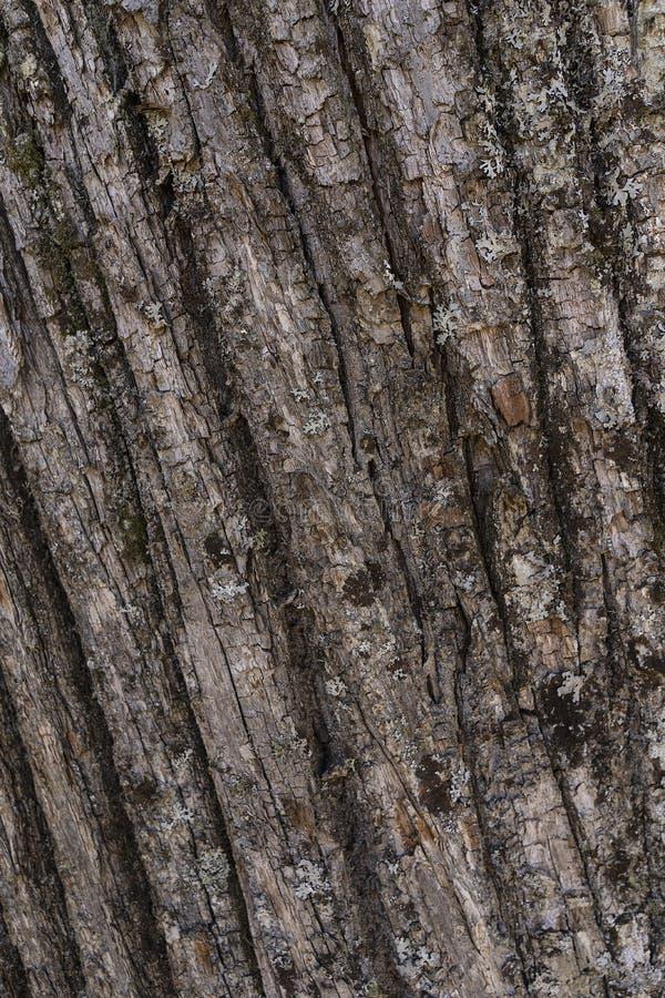 栗子吠声背景联合国森林 库存图片